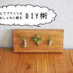 ダイソーのエアプランツをおしゃれに飾る方法【プチDIY】