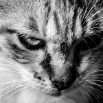 怒ってばかりでつらい人へ。怒りの感情を持ったら「分析」するといいそうですよ