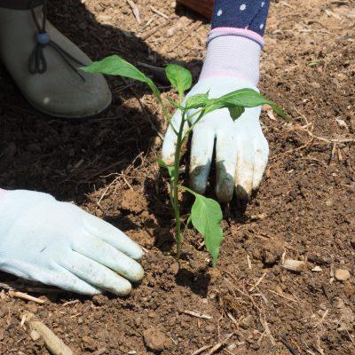 植えるときのポイント