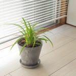 インテリアに観葉植物。「ART STONE」の植木鉢にアダンを植えてみました