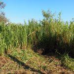 【海がみえる小さな家#4】雑草で土地の確認ができない!どのくらいの斜面になっているのか草刈りをする