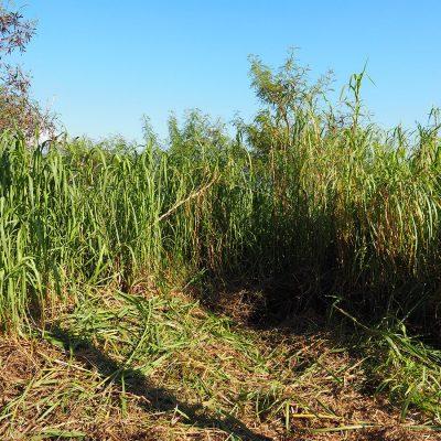 土地の草刈り