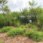 土地の農振解除(農用地区域に含まれる農地の除外手続き)のやりかた。申請方法をご紹介します